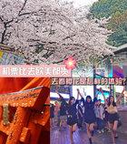 八千的机票去日本 春天去看樱花是怎样的体验?