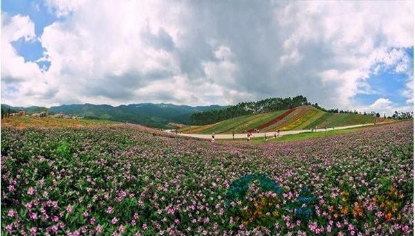 特色看点:中国最美乡村(古山重),十里蓝山花海,快乐农场,后坊村落烤